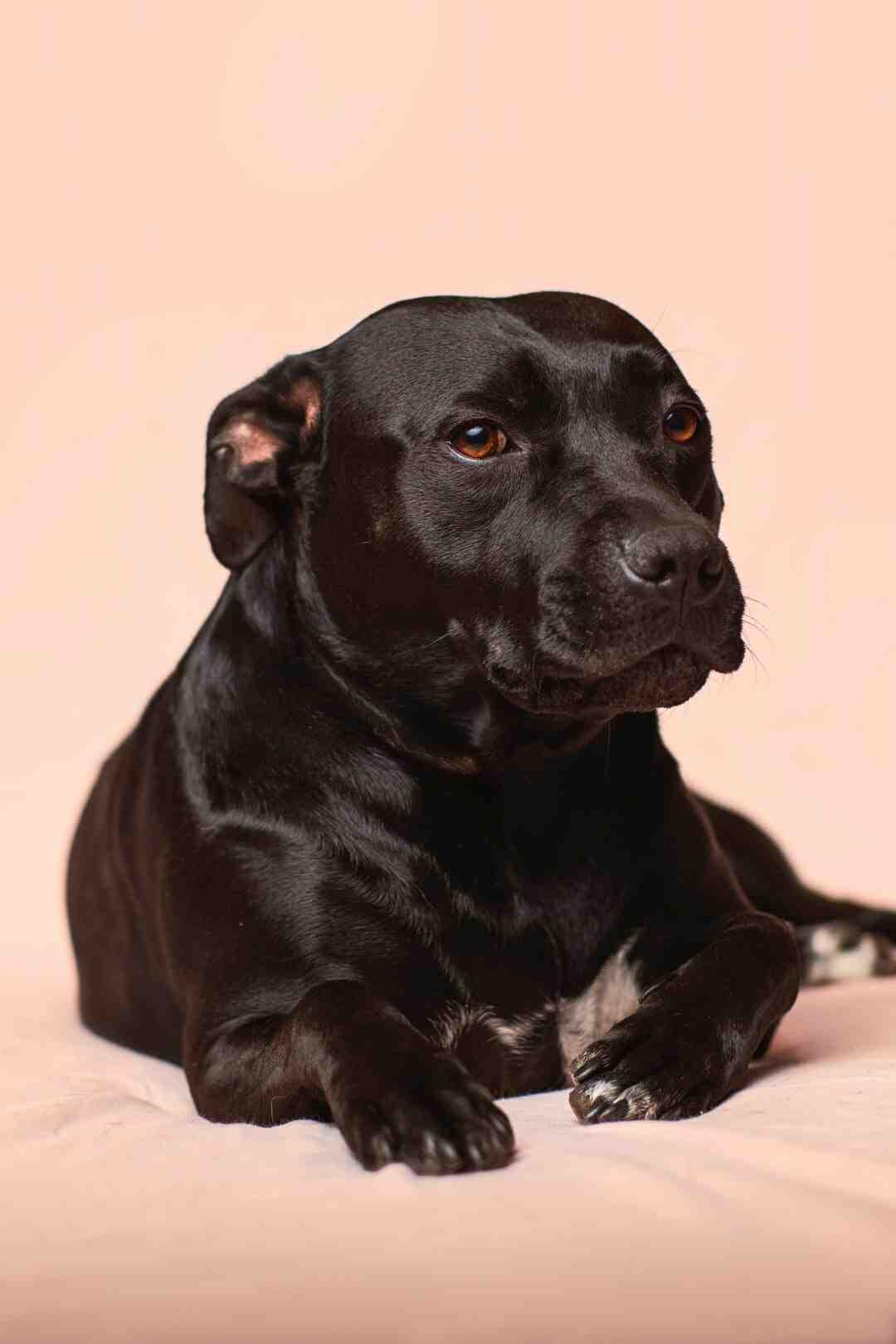 Comment empêcher un chien d'uriner sur les meubles ?